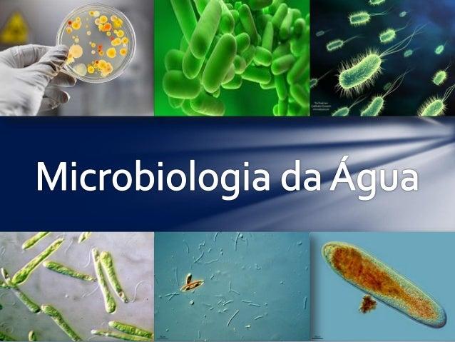 As águas naturais são locais onde vivem muitos seres microscópicos. Dentre eles encontramos : • Protozoários; • Algas; • N...
