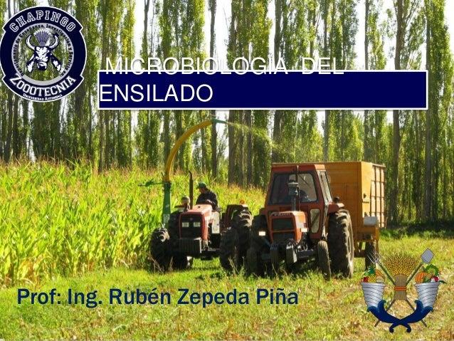 MICROBIOLOGIA DEL ENSILADO Prof: Ing. Rubén Zepeda Piña