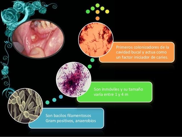 microbiologia de la placa y caries dental