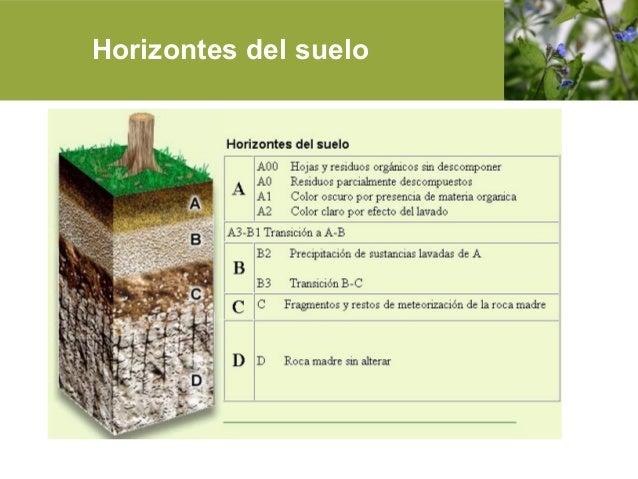 Microbiologia del suelo y aire for Cuales son las caracteristicas del suelo