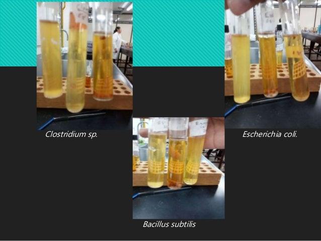 recuento de bacterias anaerobicas