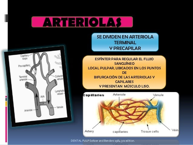 Microcirculación pulpar