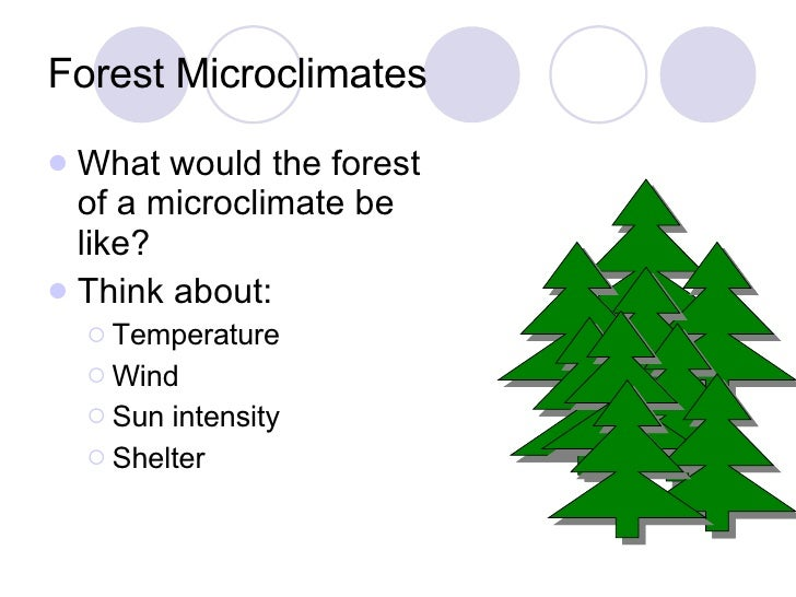 What causes microclimates to form - answers.com