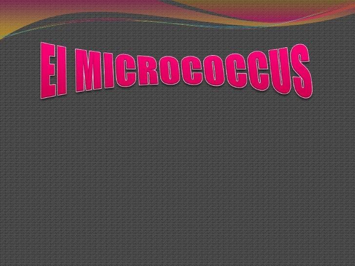 El MICROCOCCUS<br />
