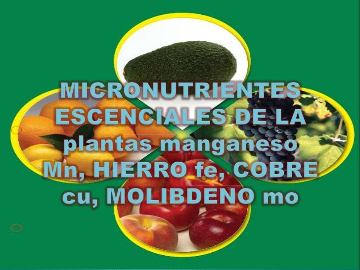    Las plantas utilizan los minerales y otros nutrientes para    poder crecer, mantenerse y producir frutos y semillas   ...