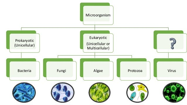 role of microorganism in human welfare Ncert solutions for class 12 biology microbes in human welfare 5 in which  way have microbes played a major role in controlling diseases caused by  harmful.