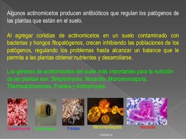 Microorganismos del suelo for Como se forma y desarrolla el suelo