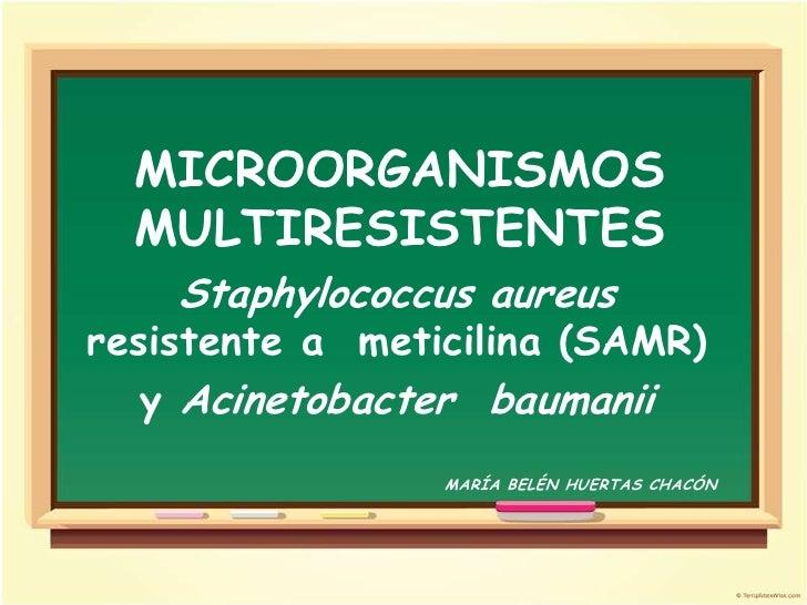 MICROORGANISMOS  MULTIRESISTENTES    Staphylococcus aureusresistente a meticilina (SAMR)   y Acinetobacter baumanii       ...