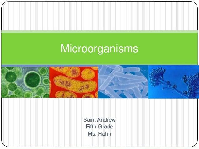 Microorganisms  Saint Andrew  Fifth Grade  Ms. Hahn