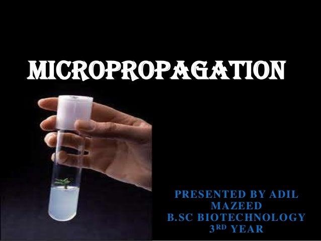 MICROPROPAGATION  PRESENTED BY ADIL MAZEED B.SC BIOTECHNOLOGY 3 RD YEAR