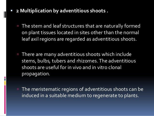  3 Organogenesis  Organogenesis is the process of morphogenesis involving the formation of plant organs i.e. shoots, roo...
