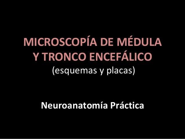 MICROSCOPÍA DE MÉDULA Y TRONCO ENCEFÁLICO (esquemas y placas) Neuroanatomía Práctica