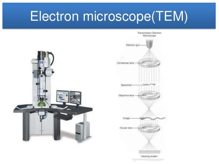 Microscope electron microscopetem ccuart Choice Image