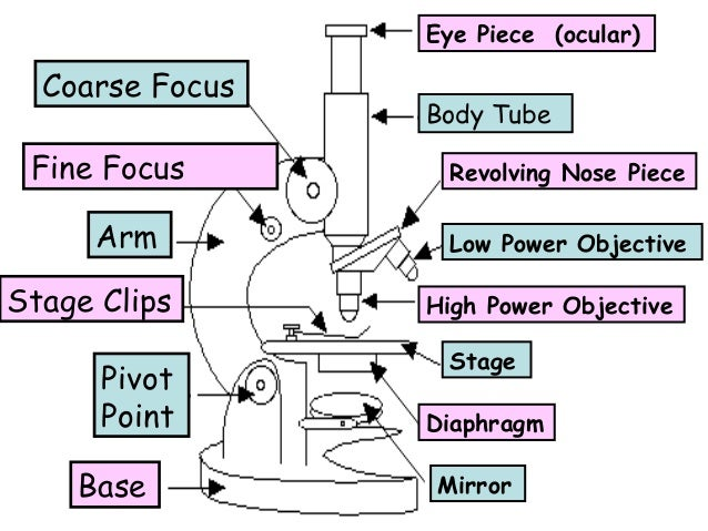 Eye Piece (ocular)  Coarse Focus Fine Focus Arm Stage Clips Pivot Point Base  Body Tube Revolving Nose Piece Low Power Obj...