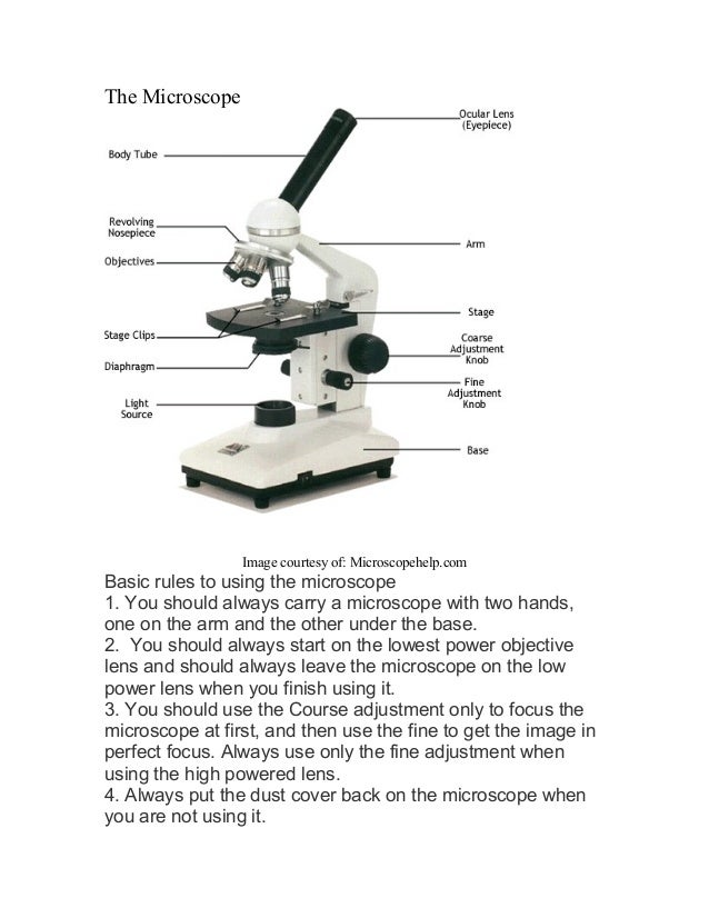 The Microscope Image courtesy of: Microscopehelp.com Basic rules to using the microscope 1 Microscope labeled diagram