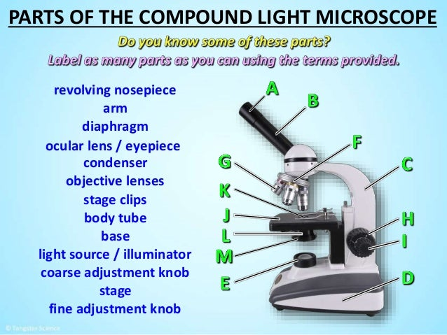 Diagram compound light microscope parts online schematic diagram microscope parts power point rh slideshare net compound light microscope parts and functions compound light microscope ccuart Image collections
