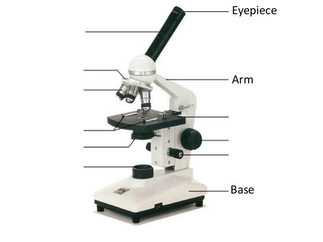 lab 1 introductory microscopy part Introduction to the microscope lab activity part i: microscope parts 1 condenser – the light rays are concentrated on the object to be observed by the condenser.