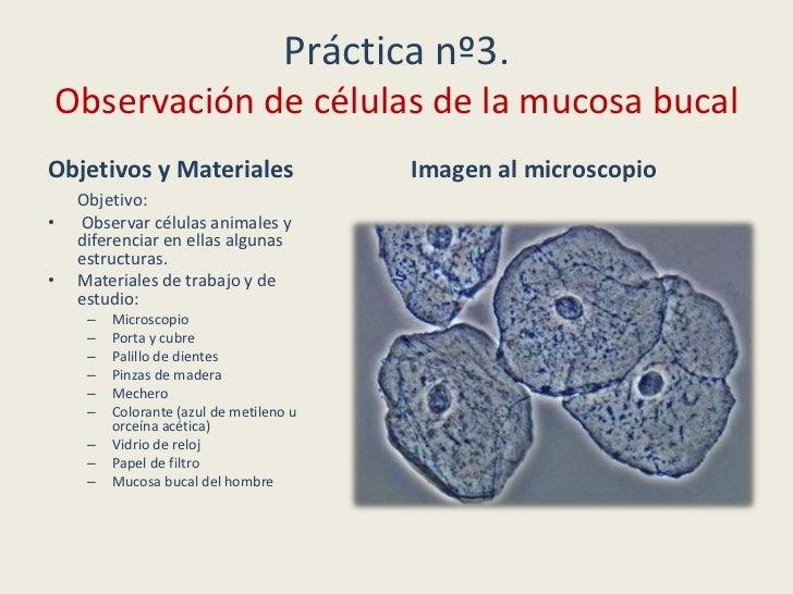 Microscopio Y Prácticas
