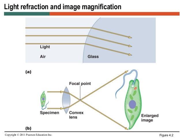 Microscopy ccuart Choice Image
