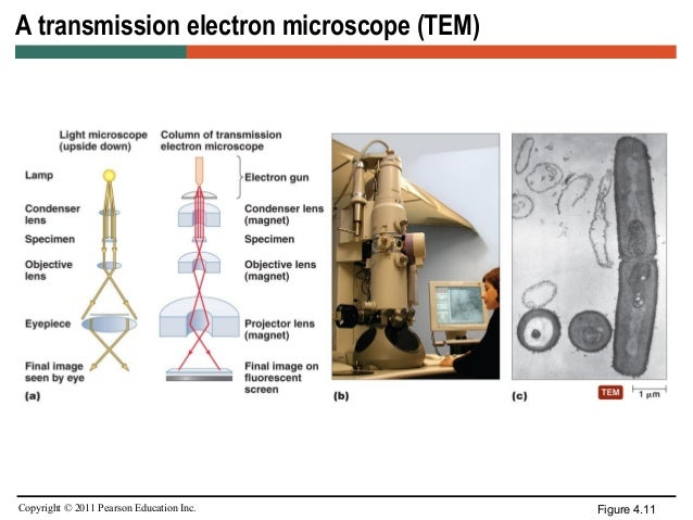Microscopy scanning electron microscopes 25 ccuart Images