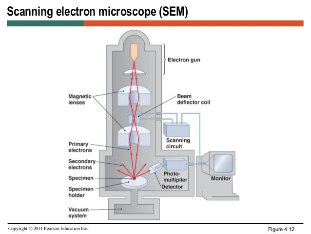scanning transmission electron microscopy thesis Characterization: structural and chemical characterization (sem, tem, fib) scanning electron microscopy scanning electron microscopy reactive ion etching of al/si(001) transmission electron microscopy sample preparation • step 1 - locate the area of.