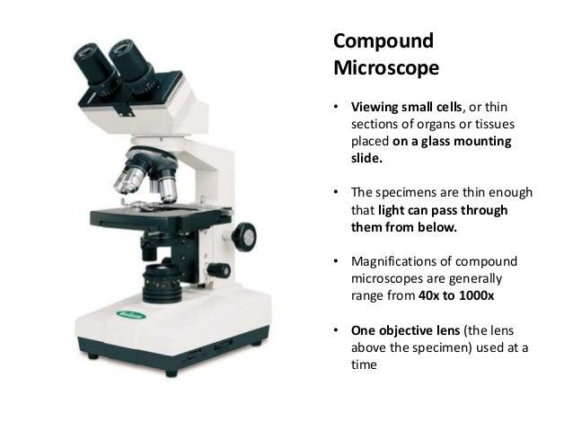 Microscopy For Beekeepers