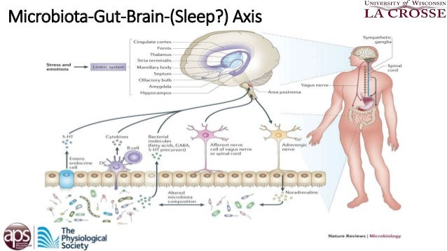 thesis gut microbiota Biogeography dgge data that were analyzed in this thesis as referenced in  figure 1  the gut microbiota is mainly composed of bacteria, but also includes .