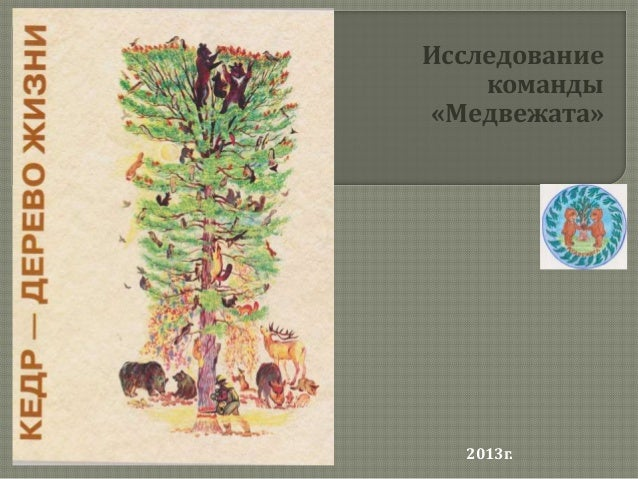Исследование    команды«Медвежата»  2013г.