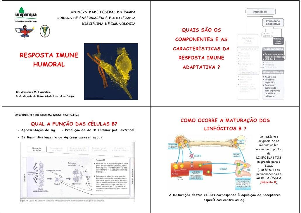 UNIVERSIDADE FEDERAL DO PAMPA                                 CURSOS DE ENFERMAGEM E FISIOTERAPIA                         ...