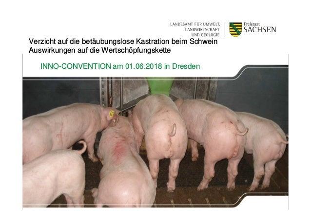 1 | XX. Monat 2013 | Name des Präsentators Verzicht auf die betäubungslose Kastration beim Schwein Auswirkungen auf die We...