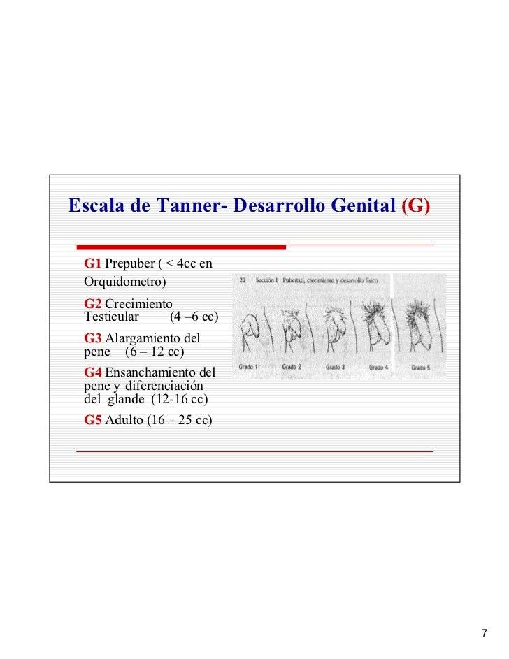 Escala de Tanner- Desarrollo Genital (G)   G1 Prepuber ( < 4cc en  Orquidometro)  G2 Crecimiento  Testicular    (4 –6 cc) ...