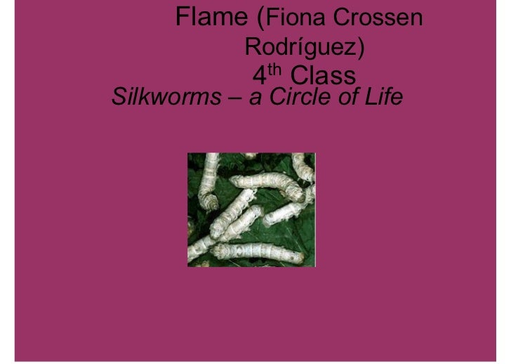 Flame (Fiona Crossen            RodrÄguez)             4th ClassSilkworms – a Circle of Life