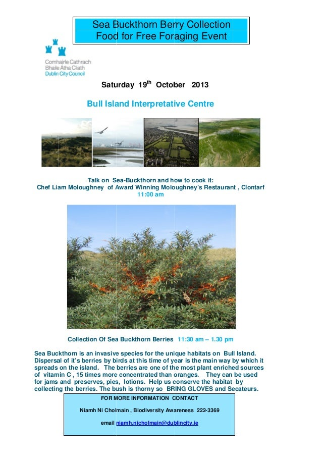 Sea Buckthorn Berry Collection Food for Free Foraging Event  Saturday 19th October 2013  Bull Island Interpretative Centre...