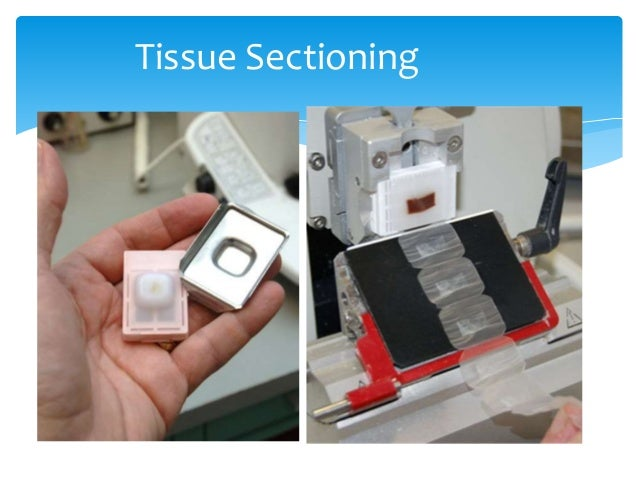 tissue sectioning 5