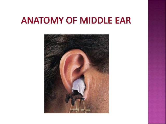 Middle ear by drhit dr rohit bhardwaj 2 ccuart