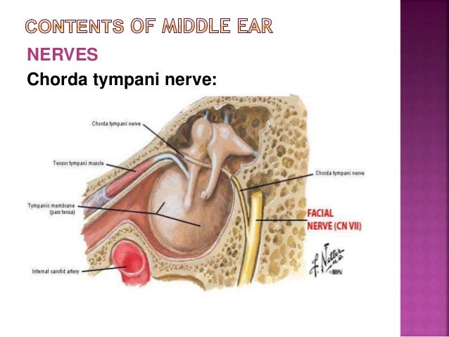 Attic ...  sc 1 st  SlideShare & Middle ear by Dr.Rohit