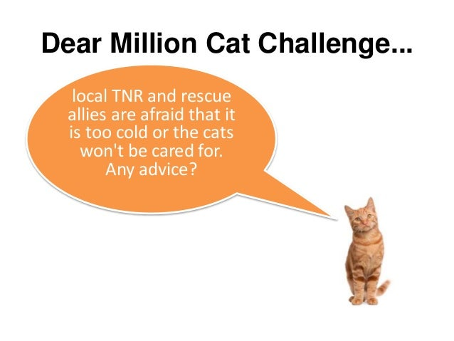The million cat challenge diving deeper with removing barriers and 16 dear million cat ccuart Image collections