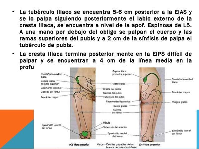 Anatomia Miembo inferior