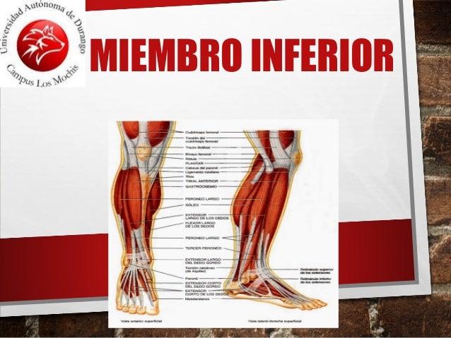 Anatomia de Miembro inferior
