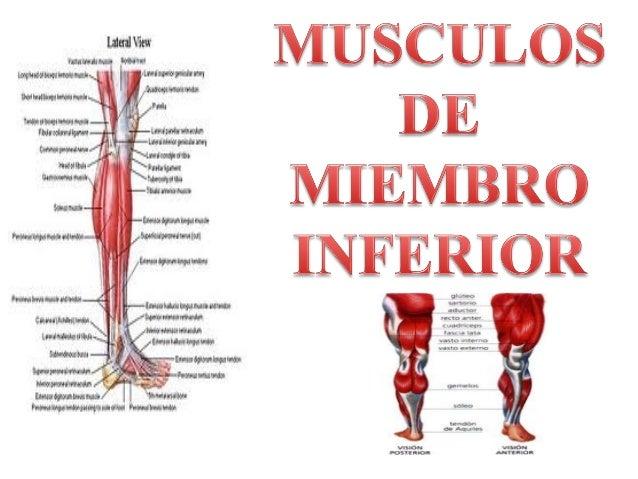 miembro inferior completo - terapia manual