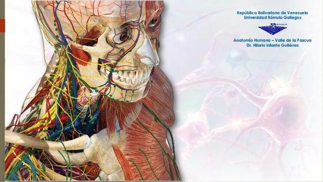 Anatomía Humana – Valle de la Pascua Dr. Hilario Infante Gutiérrez República Bolivariana de Venezuela Universidad Rómulo G...