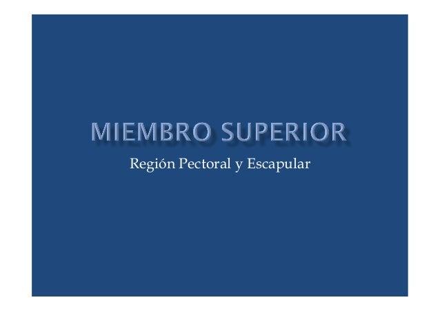 Región Pectoral y Escapular