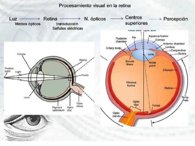 Oftalmologia Fisiologia de la Vision Isabel Bolivar