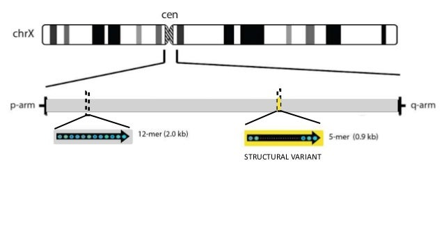 STRUCTURAL VARIANT 151516 15 3 8 2 8 4 Assemble contigs Using overlapping SV patterns
