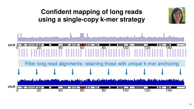 30 Spacing of single-copy k-mers can be irregular in repeat-dense regions chrX chrX X CENTROMERE ARRAY CENTROMERE CENX: 3....