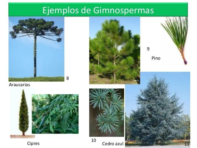 Tsgpa unidad ii tema i taxonom a for Que son plantas ornamentales ejemplos