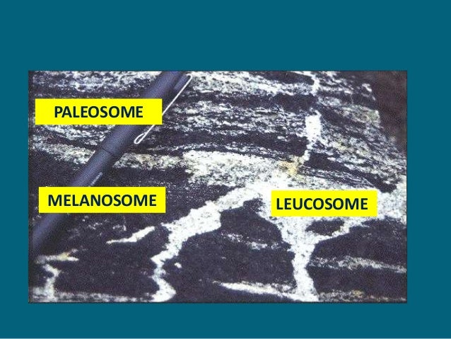 Migmatite And Metamorphism