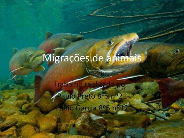 Migrações de animais<br />Trabalho realizado por:<br />Paulo Preto 8º5 nº21<br />Fábio Garcia 8º5 nº12<br />