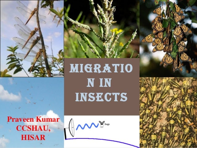 Migratio n in insects Praveen Kumar CCSHAU, HISAR