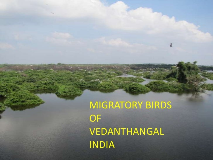 MIGRATORY BIRDS<br />OF<br />VEDANTHANGAL<br />INDIA<br />